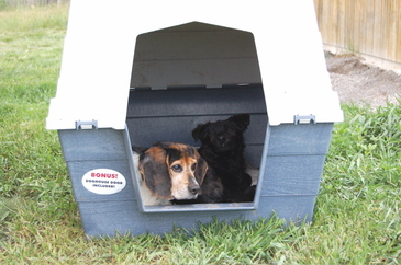 Willie_and_nevada_in_dog_house