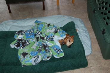Bailey_sleeping_in_again