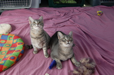 Tibby_and_fibby_oct_22