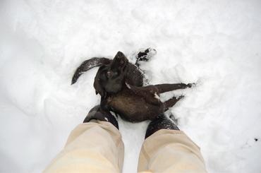 Smokey_in_snow_nov_19