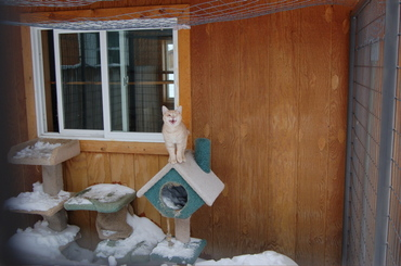 Herbie_stuck_outside