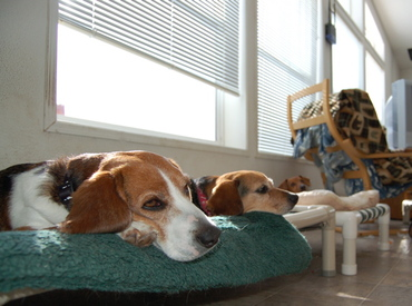Beagle_bookends_3