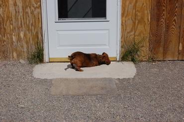 Callie_at_cat_house_door