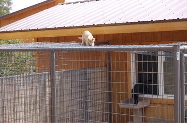 Herbie_on_top_of_enclosure