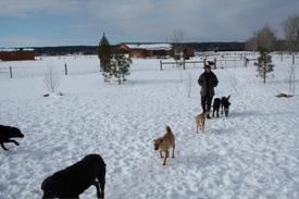 Alayne_with_dogs_jan_30
