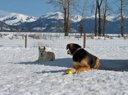Buddy_and_cedar_with_tennis_balls