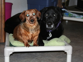 Callie_and_kenai_on_cot_1