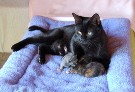 Cinder_and_kittens