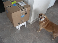 Goldie_and_box_2