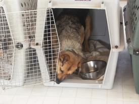 Libby_cleaning_travis_crate_door_1