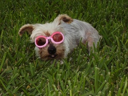 Spirit_in_doggles