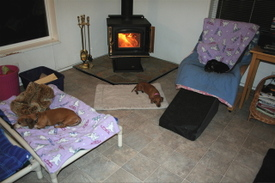 Three_dachshunds_and_a_fire