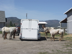 Trailer_and_horses