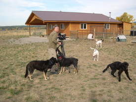 Videotaping_the_dogs_1