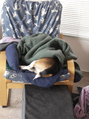 Widget_sleeping_with_back_end_out